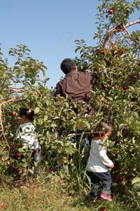 apple_harvest_fest.jpg